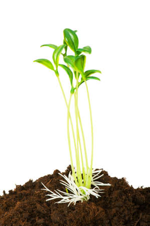 Seedlings illustrating the concept of new life photo