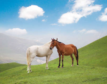 White and brown horses on green grass in summer