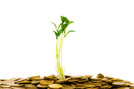 Green seedling growing from the pile of coins Stock Photo - 4626768