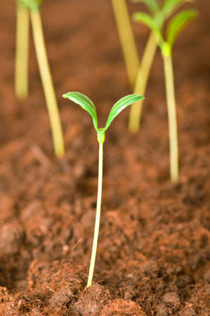 New life concept - green seedling growing out of soil Stock Photo - 4655295
