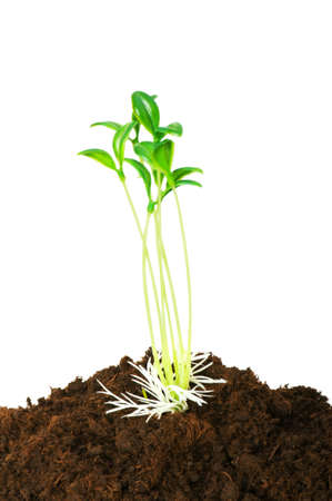 New life concept - green seedling growing out of soil photo