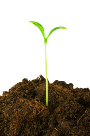 origins: Seedlings illustrating the concept of new life