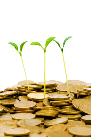 Green seedling growing from the pile of coins Stock Photo - 4655096