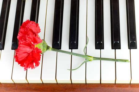 Concepto romántico - clavel rojo en las teclas de piano Foto de archivo - 4789878