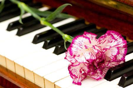 Romantic concept - red carnation on piano keys photo