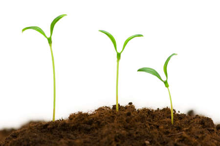 illustrating: Three seedlings illustrating the concept of new life