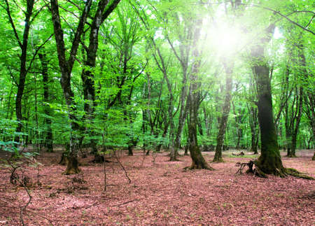 Nature concept - Green forest during bright summer day Stock Photo - 5144292
