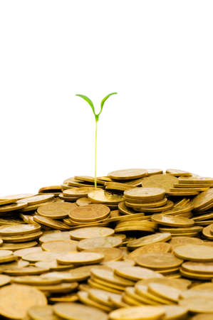 Green seedling growing from the pile of coins Stock Photo - 5171003