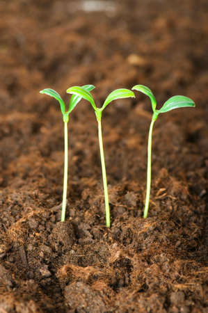 New life concept - green seedling growing out of soil Stock Photo - 5212630