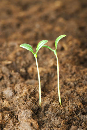 New life concept - green seedling growing out of soil Stock Photo - 5282675