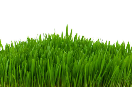 blade of grass: Green glass isolated on the white background