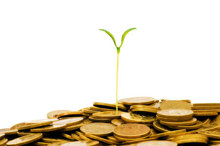 Green seedling growing from the pile of coins Stock Photo - 5282676
