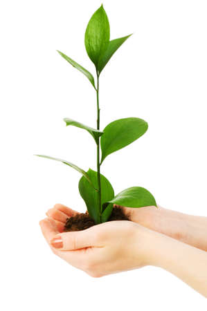 Green seedling in hand isolated on white Stock Photo - 5314135