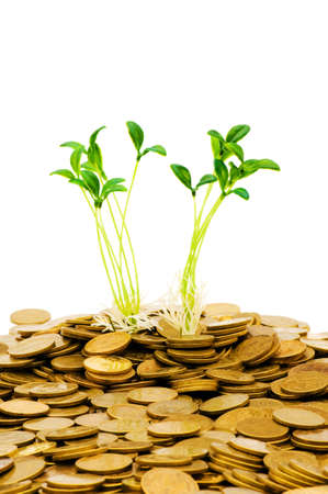 Green seedling growing from the pile of coins Stock Photo - 5314308
