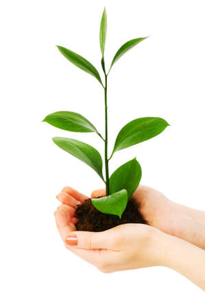 Green seedling in hand isolated on white Stock Photo - 5349036