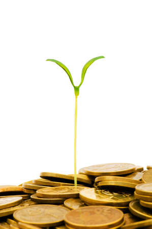 Green seedling growing from the pile of coins Stock Photo - 5348977