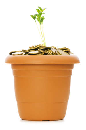 Green seedling growing from the pile of coins Stock Photo - 5398539