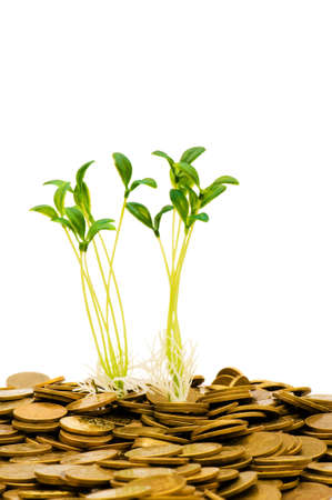 Green seedling growing from the pile of coins Stock Photo - 5398400