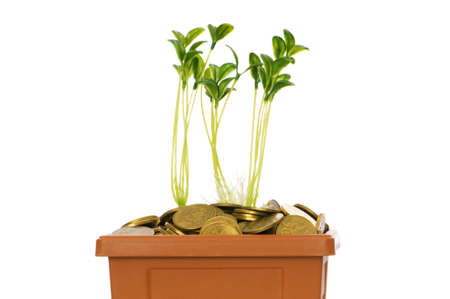 Green seedling growing from the pile of coins Stock Photo - 5436487