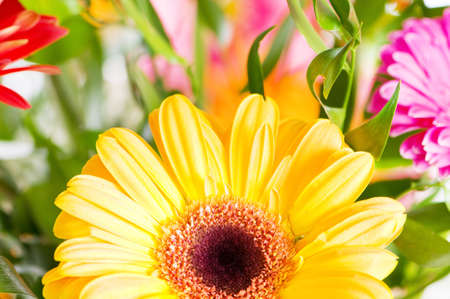 Yellow gerbera flower agaisnt green blurred background photo