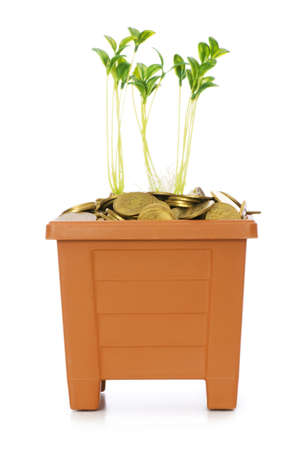 Green seedling growing from the pile of coins Stock Photo - 5510281