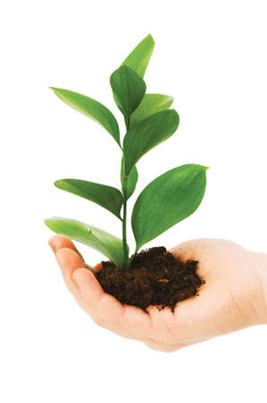 Green seedling in hand isolated on white Stock Photo - 5510259