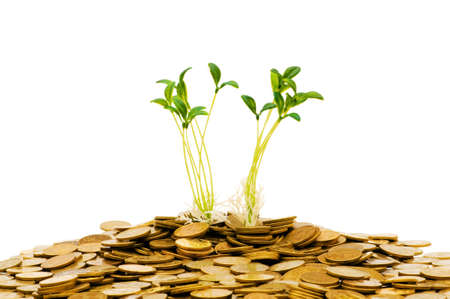 Green seedling growing from the pile of coins Stock Photo - 5510207
