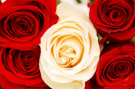 close uo: Close uo of red and white roses  Stock Photo
