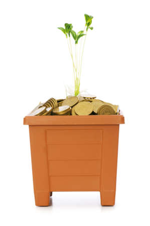 Green seedling growing from the pile of coins photo