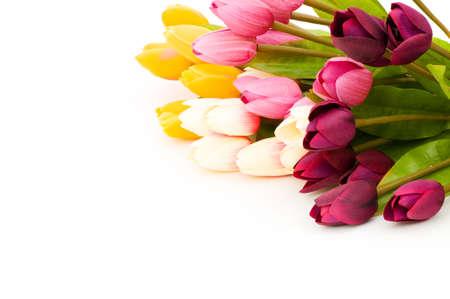Many tulips isolated on the white background