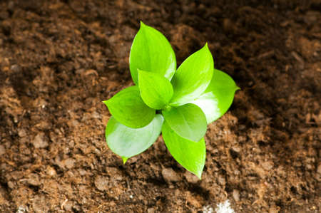 beginning: New life concept - green seedling growing out of soil