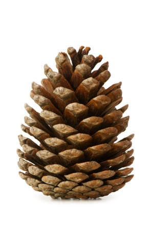 pine: Dry cone isolated on the white