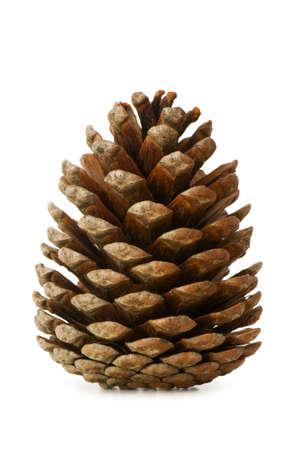 pine cone: Secco cono isolato sul bianco