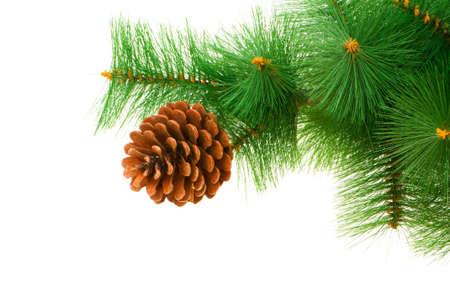 흰 배경에 고립 된 크리스마스 트리