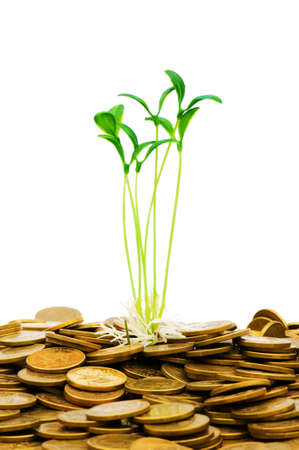 Green seedling growing from the pile of coins Stock Photo - 5963104