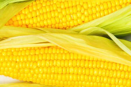 Extreme close up of yellow corn cobs photo