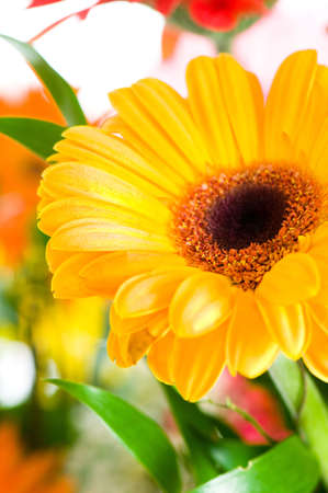 Gerbera flowers agaisnt green blurred background Stock Photo