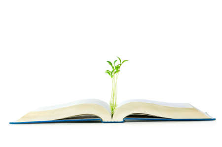 Knowledge concept with books and seedlings Stock Photo - 6085426