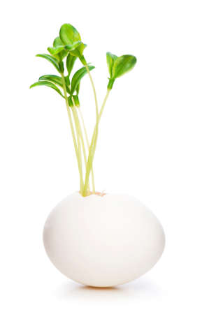 New life concept with seedling and egg on white photo