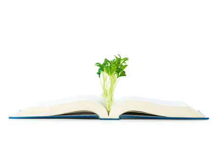 Knowledge concept with books and seedlings Stock Photo - 6291021