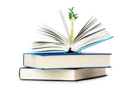 Knowledge concept with books and seedlings Stock Photo - 6313918