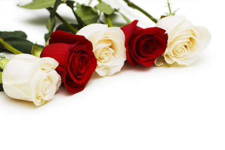 Red and white roses isolated on white Stock Photo - 6724978