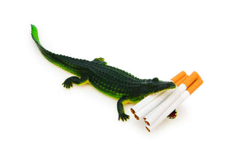 quiting: Crocodile with cigarettes isolated on white