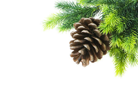 Cone and christmas tree isolated on white photo