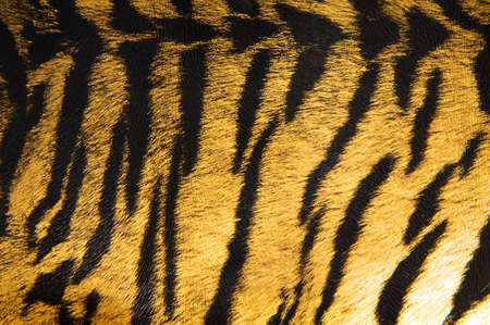Imitation of tiger leather as a background photo