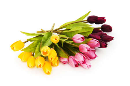 Colourful tulips isolated on the white background photo