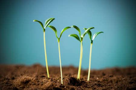 Groene zaailing illustreren concept van het nieuwe leven