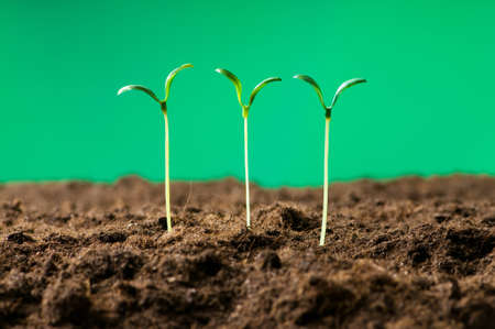 Green seedling illustrating concept of new life photo