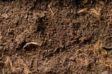 Close up of soil - can be used as background Stock Photo - 7444176