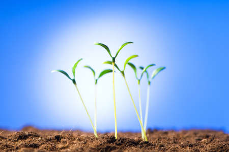 Green seedling illustrating concept of new life Stock Photo - 7546338